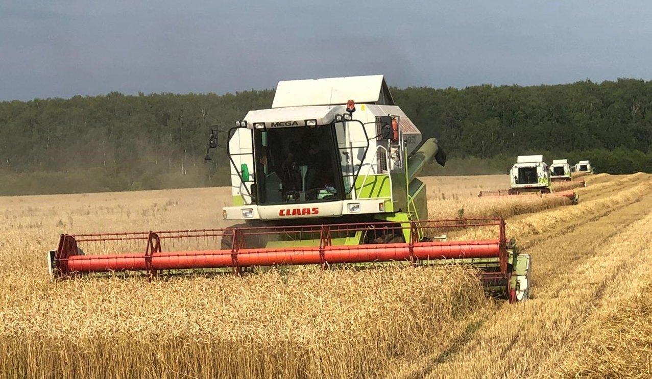 В Подмосковье убрали около 400 тонн зерновых и зернобобовых культур , фото-1