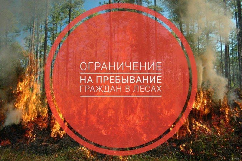 Въезд транспорта и пребывание граждан в подмосковных лесах ограничено, фото-1