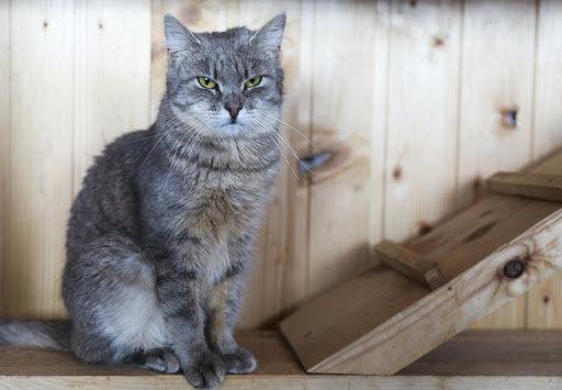 Бездомных кошек посчитают волонтеры, фото-1