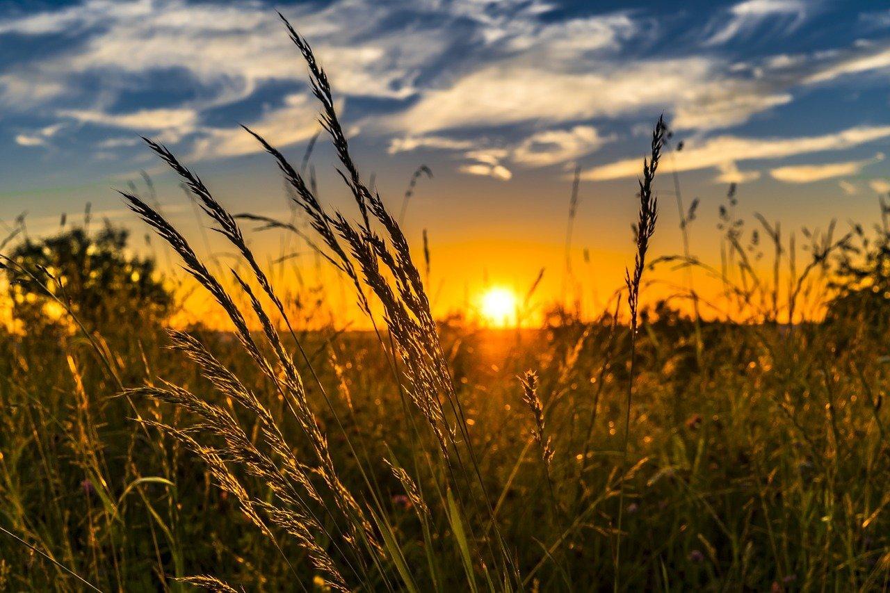 В сельское хозяйство Подмосковья инвестировали около 36 млрд рублей, фото-1