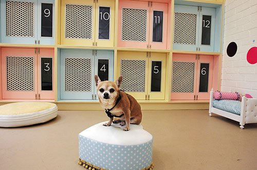 Гостиницу для животных построят в Новой Москве, фото-1
